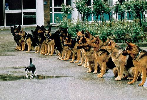 ¿Quieres Tener Disciplina? Te Damos Algunos Consejos
